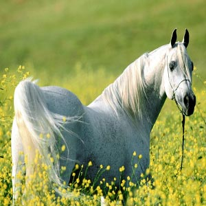 داستانک/ معنویت اسبی