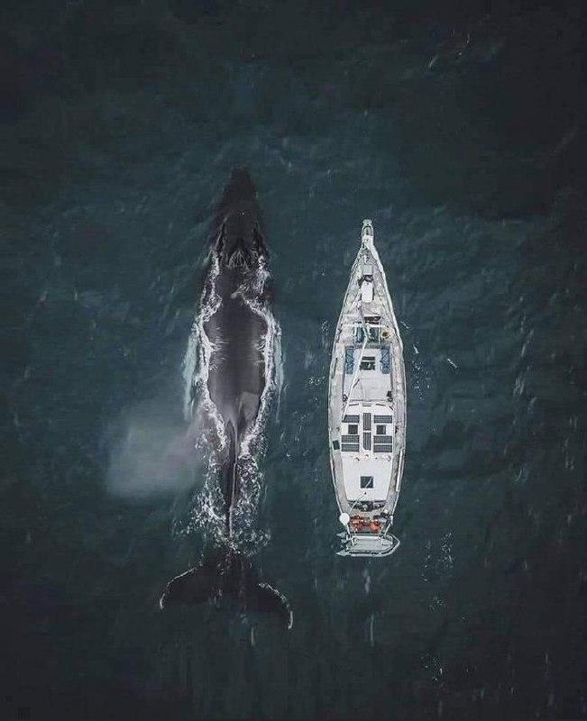 نهنگی در کنار یک قایق