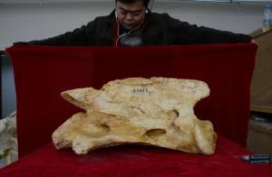 ترین ها/ فسیل بزرگترین کرگدن جهان کشف شد!