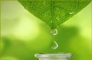 تولید داروی گیاهی سوختگی با کمک منابع طب سنتی