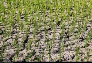 باران بهاری در خراسان شمالی ۵۸ درصد کاهش یافت