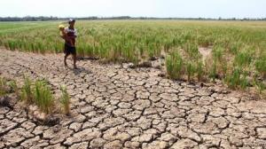 خسارت ۱۵۰ میلیاردی خشکسالی به محصولات زراعی ملایر
