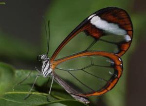 حشراتی با قابلیت فناوری رادارگریزی