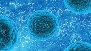 استفاده از سلولهای بنیادی برای تعدیل سیستم ایمنی در کووید-۱۹