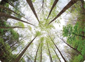 درختان اتفاقات اطراف شان را درک می کنند؟