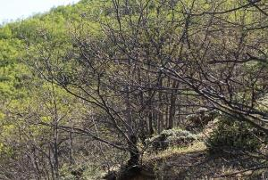 جنگلی با درختان بیبرگ در ارسباران
