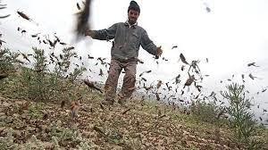 صحنه ای که هر کشاورز زحمتکشی رو دق میده