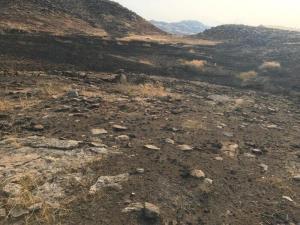 آتشسوزی منابع طبیعی لالی مهار شد