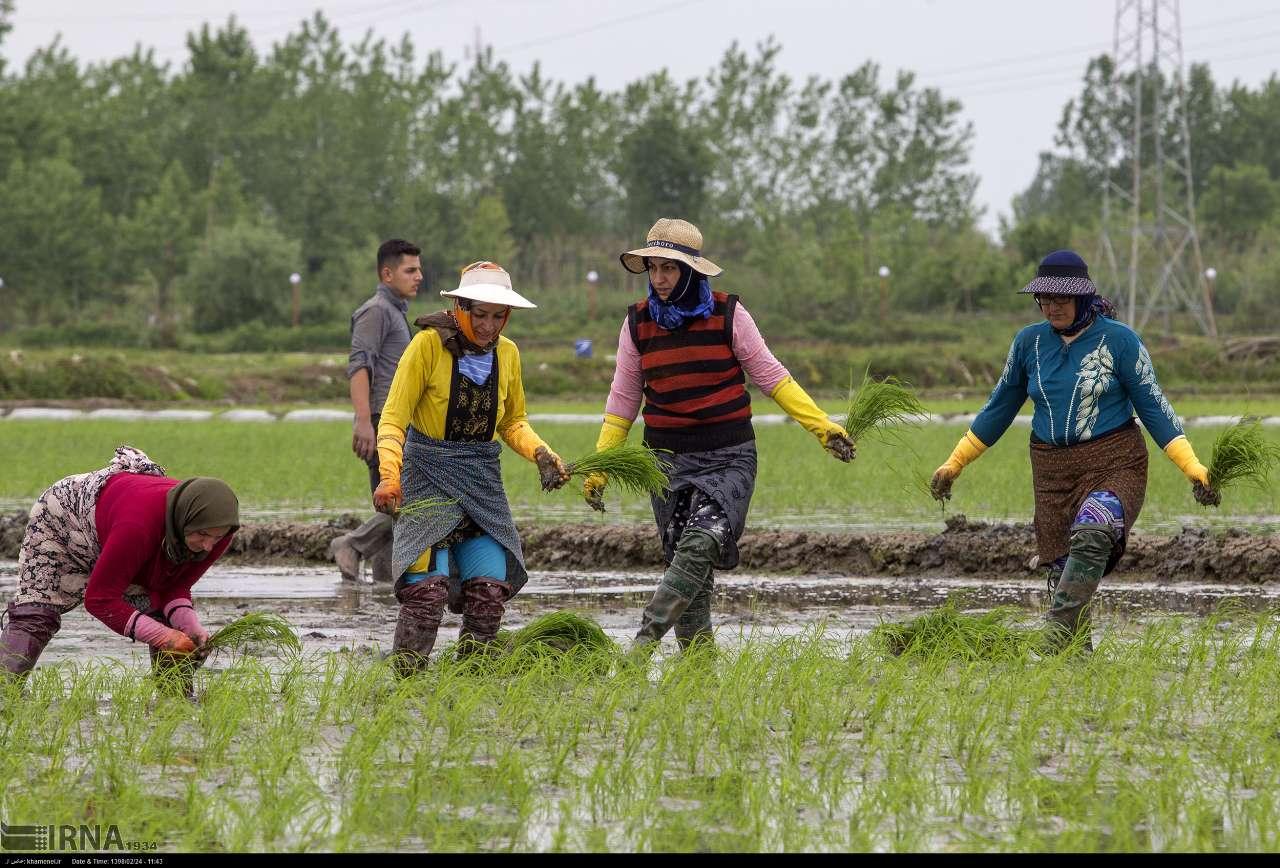 یک میلیارد متر مکعب آب سد سفیدرود برای کشاورزی گیلان رها سازی شد