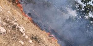 شبلیز زیبا همچنان در آتش میسوزد