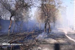 مهار حریق گسترده در روستای رشمه گرمسار؛ ۱۰۰ اصله درخت سوخت