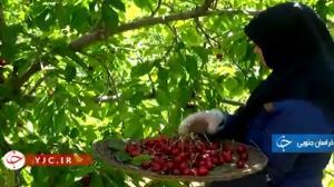 برداشت نوبرانههای تابستانی در خراسان جنوبی