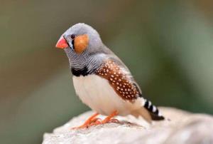عجب پرنده بدشانسی بود!
