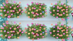 آموزش تهیه گلدان با مواد بازیافتی