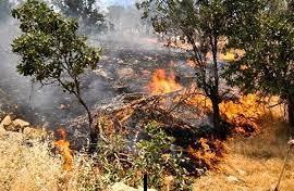 زبانههای آتش در عرصههای طبیعی دیشموک