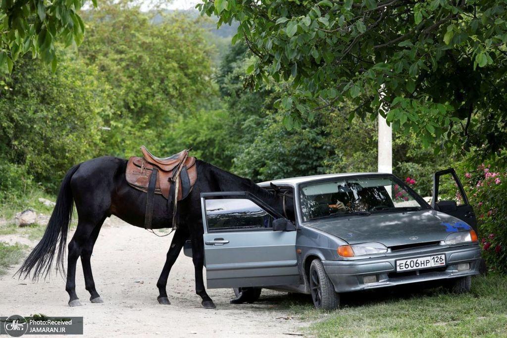 اسبی در حال خوردن هویج از داخل یک اتومبیل
