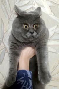 با گارفیلد واقعی در دنیای گربهها آشنا شوید