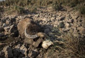 واکنش سازمان محیطزیست به فاجعه تالاب هورالعظیم: طبیعی است!
