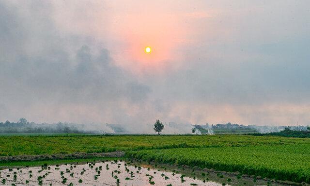 رفع تنش آبی برای برنجکاران شهرستان رشت
