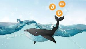 دو نهنگ بیت کوین هزاران سکه از کوین بیس خارج کردند!