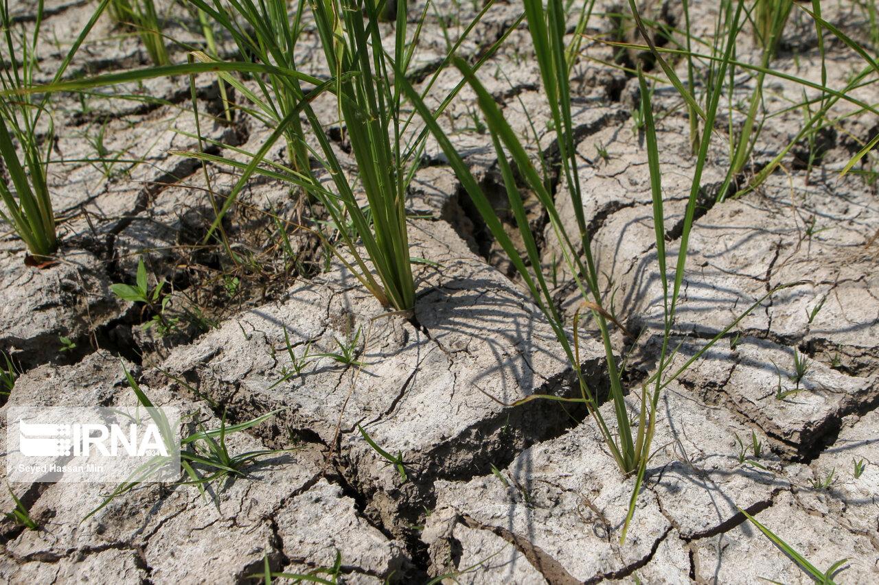 دبیرخانه کشاورز گلستان در مقابله با خشکسالی از مسوولان درخواست کمک کرد