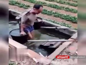 ایده جالب یک کشاورز چینی برای صرفهجویی در انرژی و آب