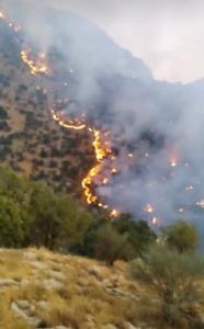 آتشسوزی گسترده در جنگلها و مراتع «نارک» گچساران