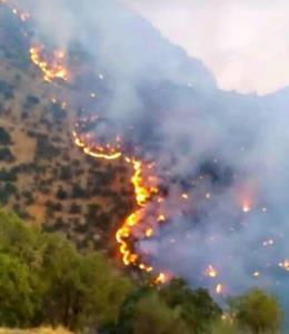 اعمال اشد مجازات قانونی برای عاملان آتشسوزی جنگلها