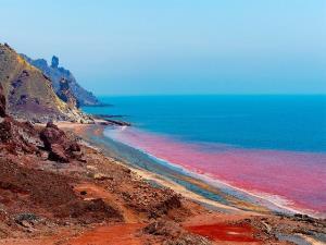 جلبک دریای عمان، منبع ارزشمند آنتیاکسیدان