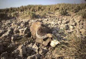 تیر غمانگیز در بزرگترین تالاب مرزی ایران