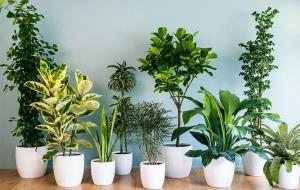 آموزش نگهداری از گیاهان آپارتمانی