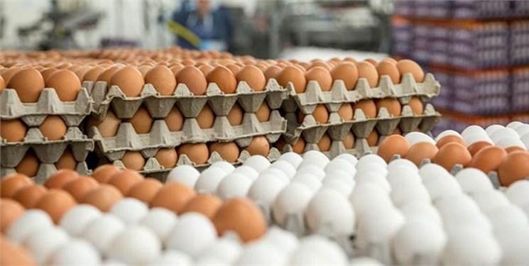 هشدار درباره کاهش توليد تخم مرغ در ماههاي آينده