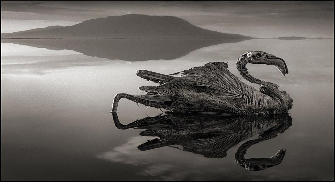 دریاچه ترسناک ناترون در شمال تانزانیا