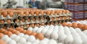 هشدار درباره کاهش تولید تخم مرغ در ماههای آینده