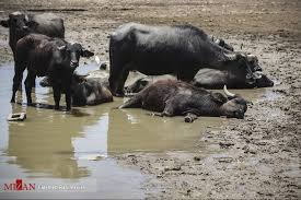 درد آب در خوزستان