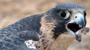 کشف ۱۵۰ قطعه پرنده وحشی در شیراز