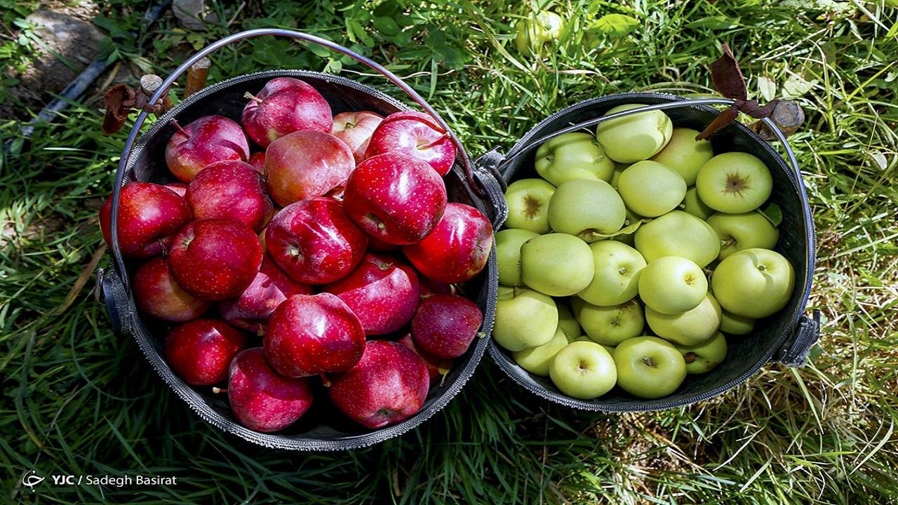 میوه ارزان می شود
