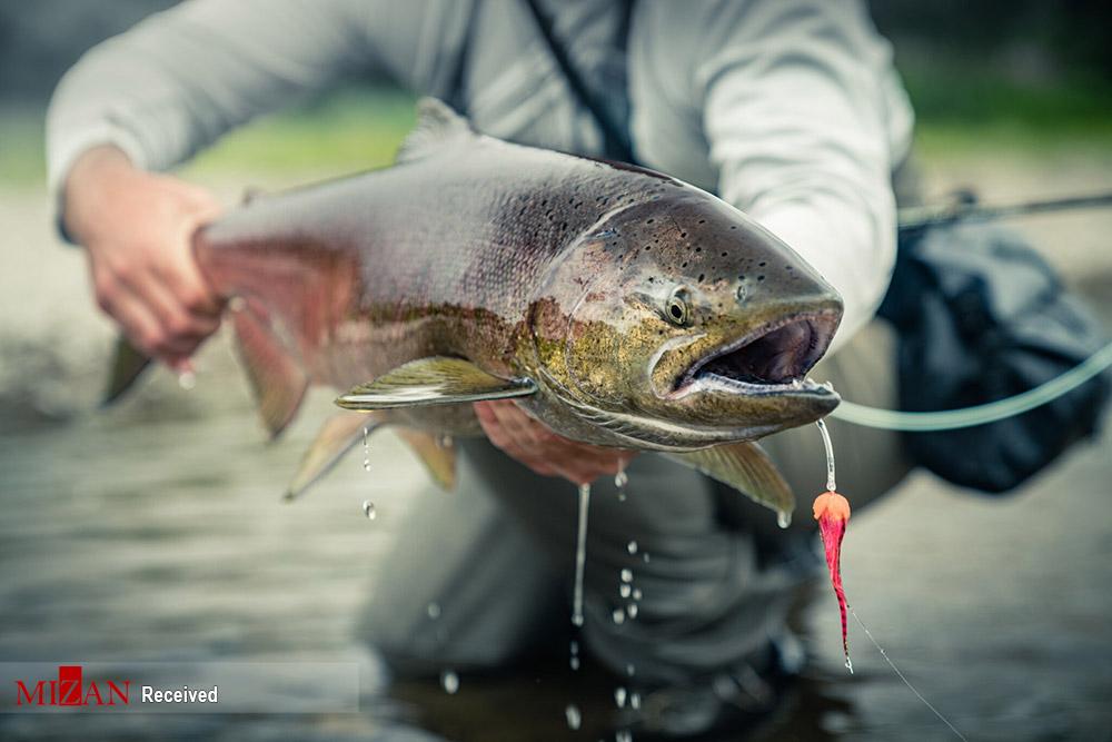ماهیگیری در آلاسکا