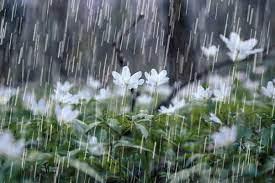 اعلام میزان بارش در نیریز و بختگان