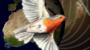 پرندگان با استفاده از فیزیک کوانتوم، مسیریابی می کنند!