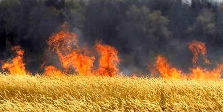 حريق گسترده در «ميانکاله» از ظهر امروز