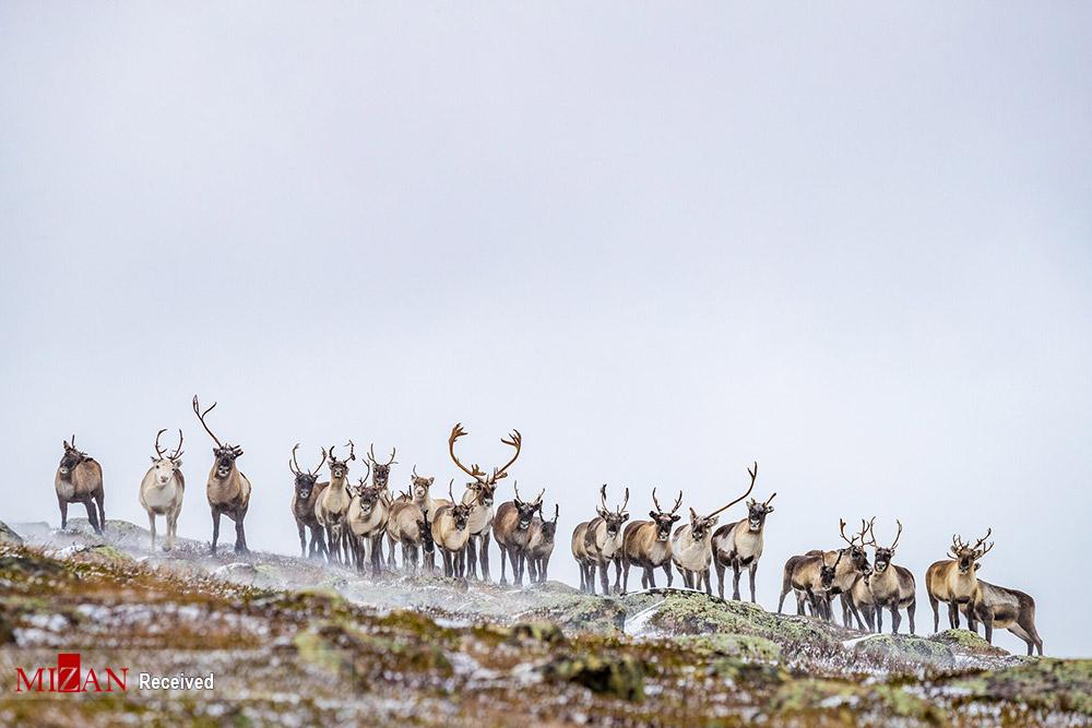 حیات وحش خیره کننده سوئد