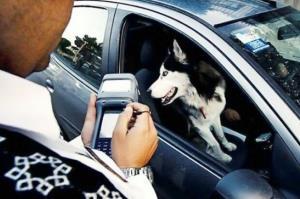 برخورد با سگ گردانی در خودرو؛ نظر پلیس در مورد موتورسواری زنان