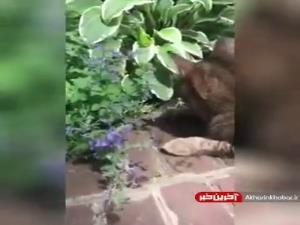 اعتیاد گربه ها به برخی از بوی گیاهان!