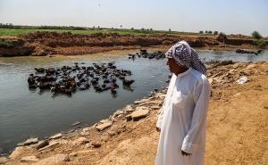 آخرین وضعیت تالاب هورالعظیم پس از رهاسازی آب