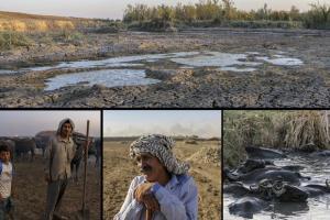 چرا کشاورزان خوزستان اصرار به کشت برنج دارند؟