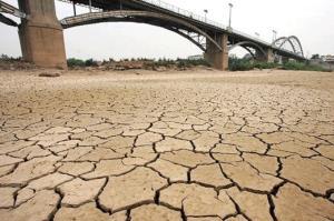 کشت برنج در خوزستان درگیر بحران آب