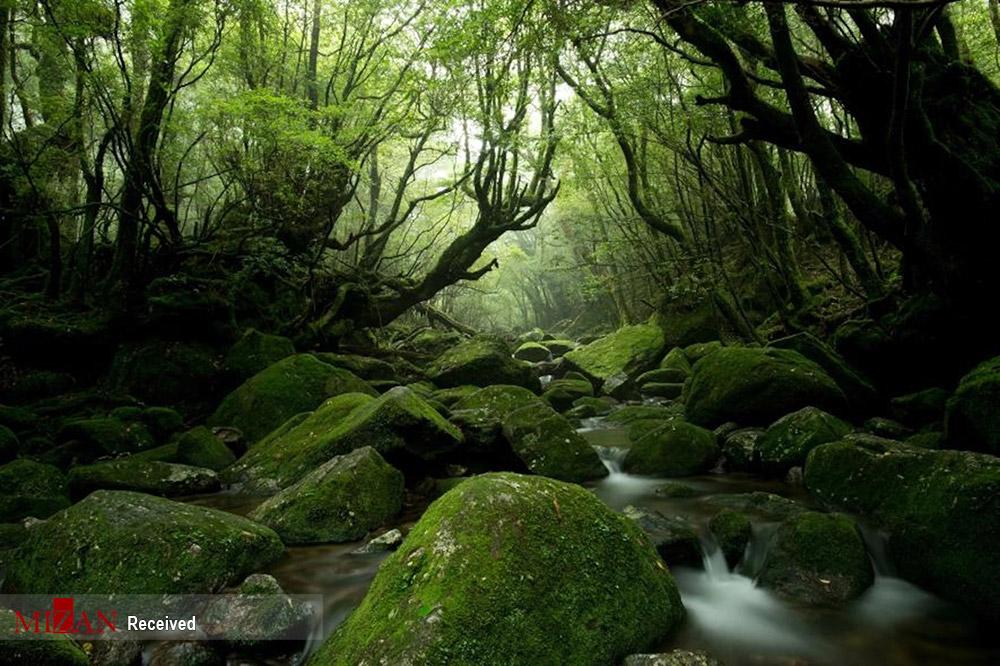 تصاویری زیبا و تماشایی از طبیعت