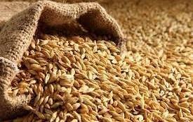 تخصیص ۱۰ هزار تن جو ویژه خشکسالی به مازندران