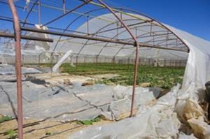 خسارت ۳۰ درصدی طوفان به گلخانههای خراسان جنوبی
